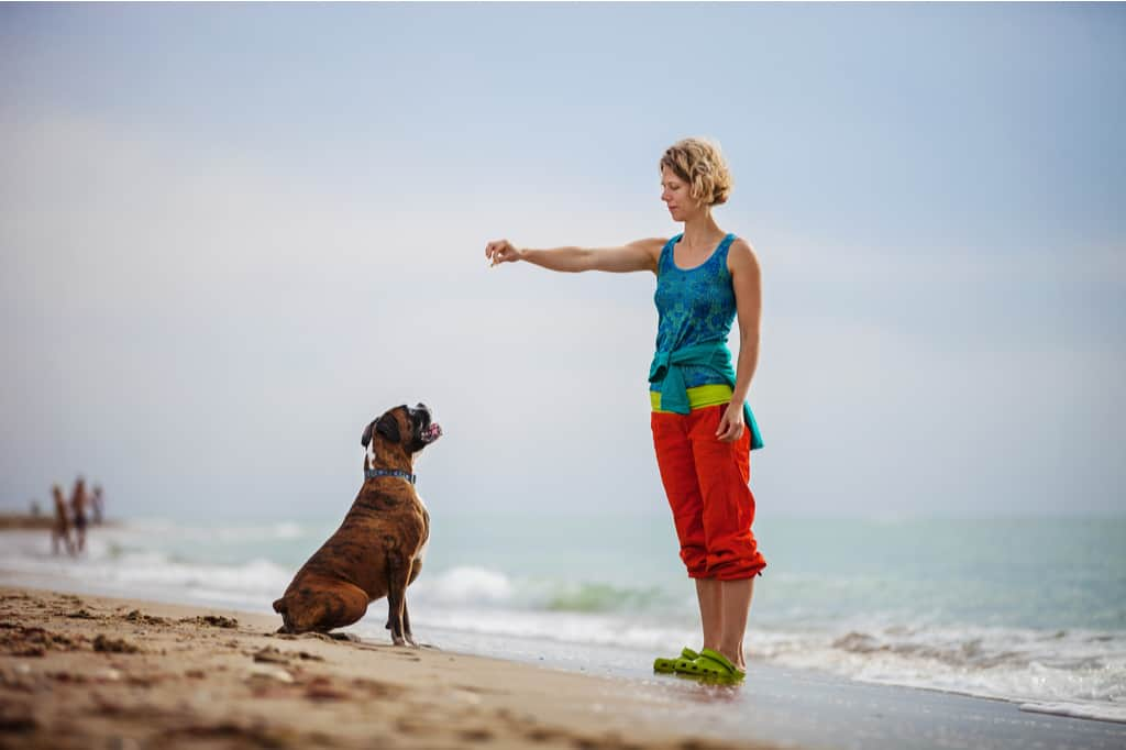 Boxer dog training with owner on the beach